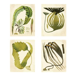 Harvey Seaweeds, Set Of 4, Unframed Artwork For Sale