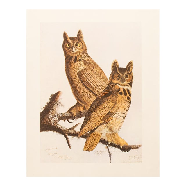 1960s Cottage Lithograph of Great Horned Owl by Audubon For Sale