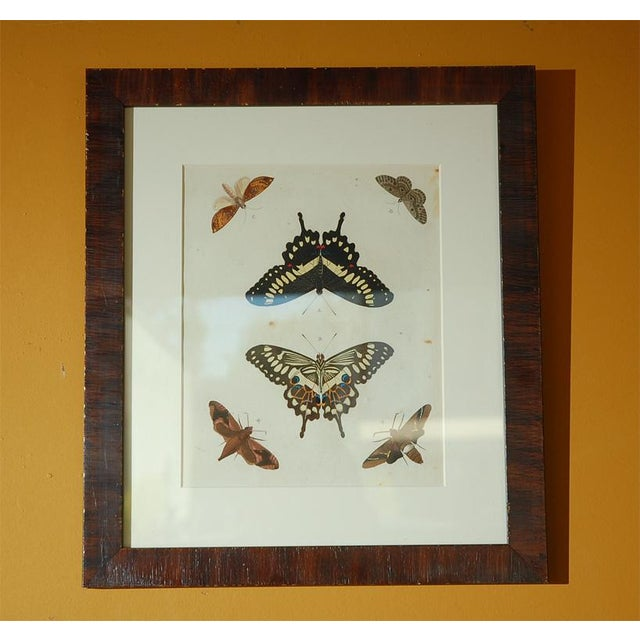 Early 18th Century Antique Butterfly Prints - Set of 8 For Sale - Image 4 of 11