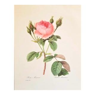 """Pierre-Joseph Redouté Reproduction """"Roses"""" Botanical Print For Sale"""