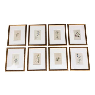 Antique Hand Colored Botanicals Professionally Framed Antique Gold Leaf Style Prints - Set of 8 For Sale