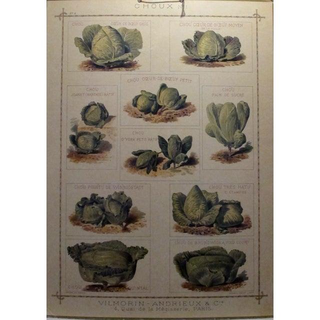 1900 Original French Vintage Vegetable Chart - Image 3 of 6