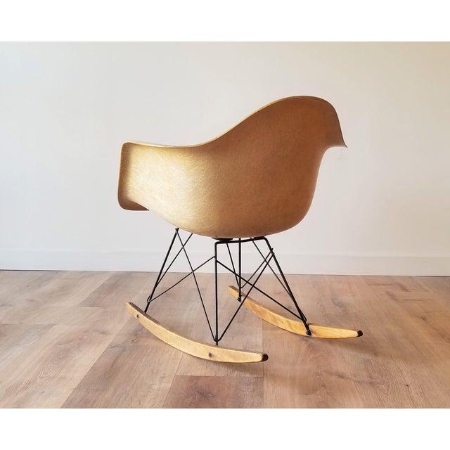 Herman Miller 1960s Eames RAR Rocking Chair in Ochre Light for Herman Miller For Sale - Image 4 of 13