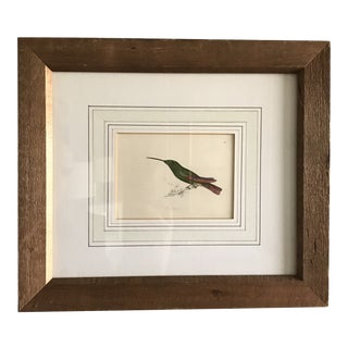 Early 20th Century Antique Hand Stenciled and Colored Hummingbird Drawing For Sale