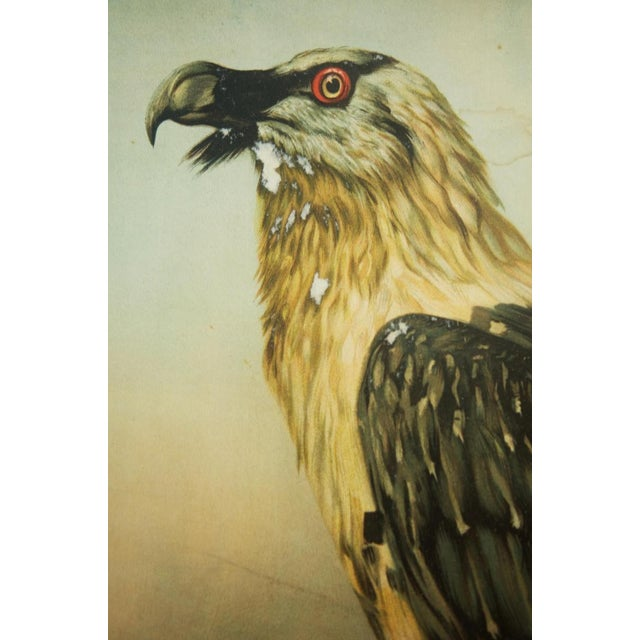 This vintage school poster depicts an eagle. It is not signed but was probably made in the 1960s. Print on paper. PLEASE...