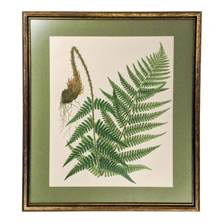 Vintage Botanical Fern Print With Gold Frame For Sale