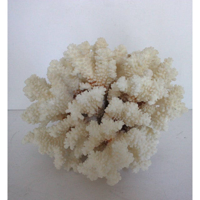 Natural Coral Specimen - Image 2 of 3