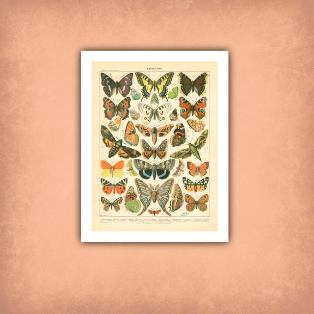 Vintage Papillons Archival Print For Sale - Image 4 of 4