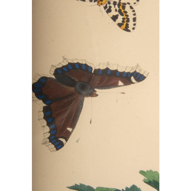 Late 18th Century Plate Xii, Camberwell Beauty, Large Magpie Moth, Moses Harris, 1785 For Sale - Image 5 of 7