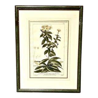 18th Century English Botanical Engravings, Set of 4 For Sale