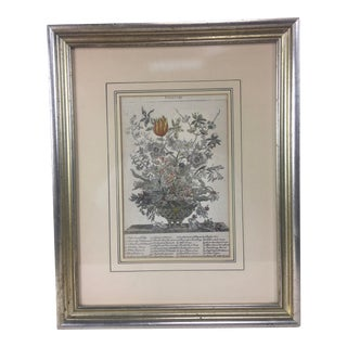 Mid 20th Century English Baroque Style Botanical Print, Framed For Sale