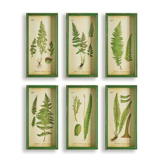 Fern Study Shadow Box Prints - Set of 6 For Sale - Image 4 of 4