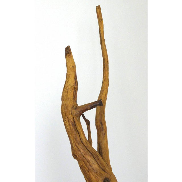 Petrified Amazon Wood Sculpture by Contemporary Brazilian Artist Valeria Totti For Sale - Image 4 of 9