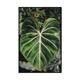"""""""Single Leaf"""" Original Framed Photograph"""