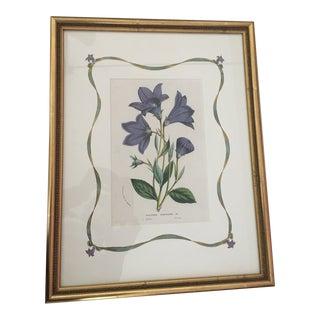 19th Century Antique Botanical Print by Van Houtte, Framed For Sale