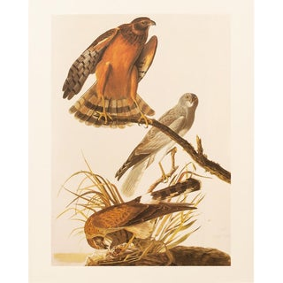 1960s Cottage Lithograph of Marsh Hawk by Audubon For Sale