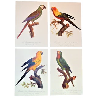 Early 20th Century Antique Jacques Barraband Lithograph Prints - Set of 4 For Sale