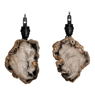 French Polished Petrified Wood Wall Sconces - Pair For Sale