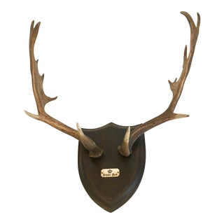 19th Century Black Forest Red Stag Antlers Mounted on Shield Shaped Plaque For Sale
