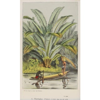 Vintage Palms at Water's Edge Chromolithograph