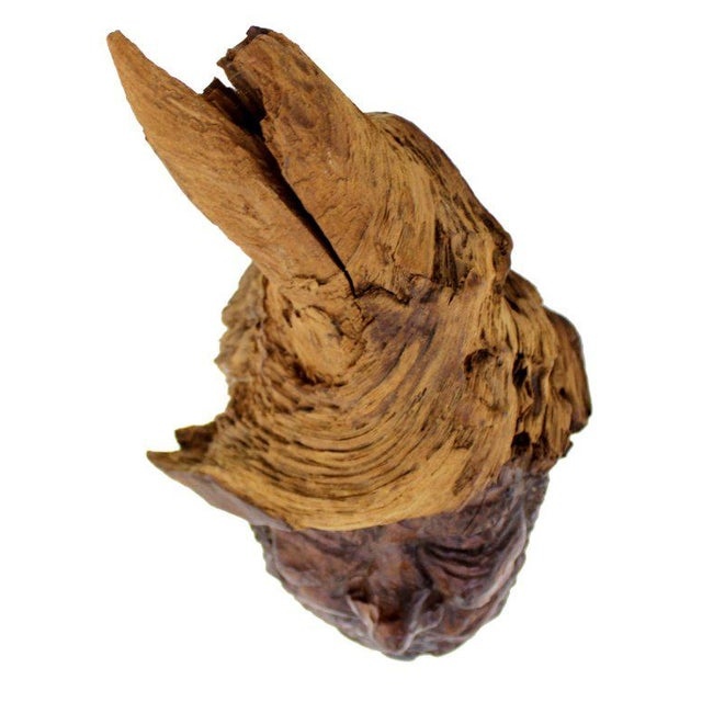 Detailed Burl Wood Carving of an Elf or Gnome Face Sculture - Image 6 of 9