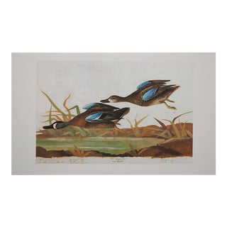 XL Lithograph of Blue-Winged Teal, 1966