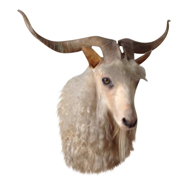 Angora Sheep Taxidermy Mount - Image 1 of 3