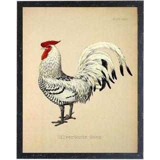 Zilverbonte Haan Rooster 24x30 For Sale