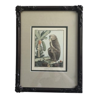 Late 19th Century Antique Victorian English Hand Colored Monkey Print For Sale