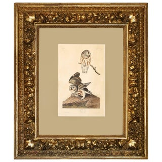"Monumental Framed Audubon Print of ""The Little Owl,"" 1834 Havell Edition For Sale"