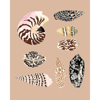 """""""Fiji Shells in Pink Clay"""" Contemporary Giclee Print by Sarah Gordon For Sale"""