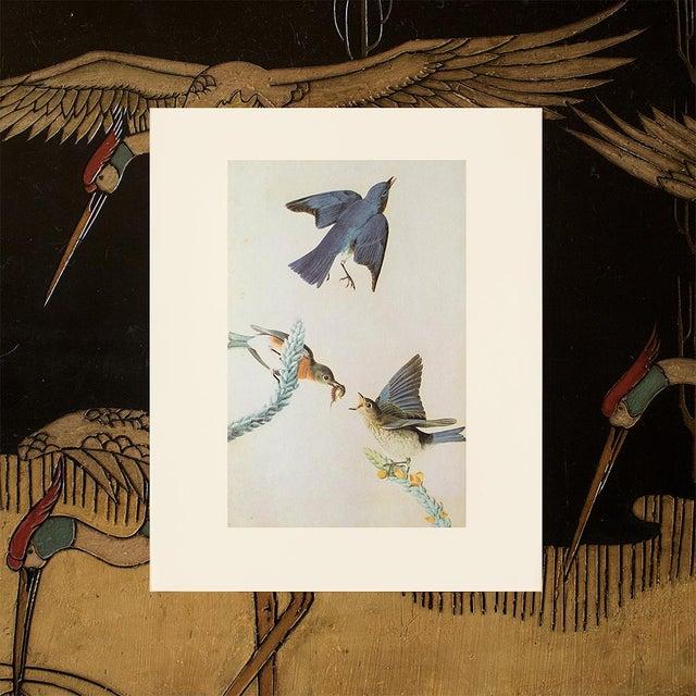 1960s Eastern Bluebird by John James Audubon, Vintage Cottage Print For Sale - Image 5 of 8