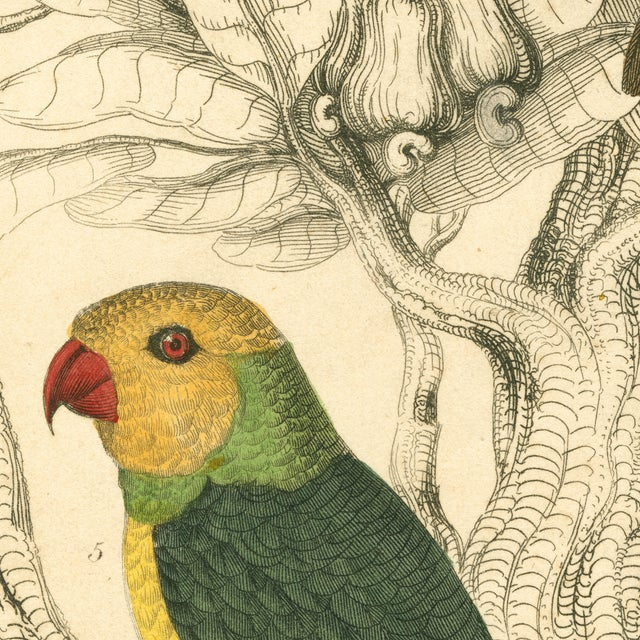 Vintage Parakeets Archival Print - Image 3 of 3