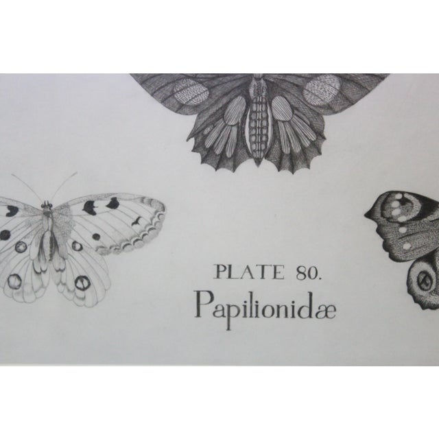 White Black and White Butterflies Sketch For Sale - Image 8 of 10