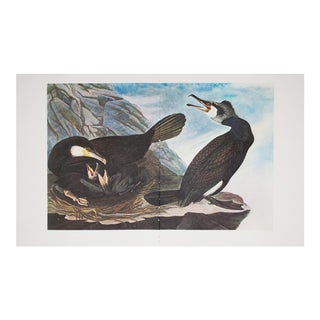 XL Vintage Lithograph of Great Cormorant, 1966