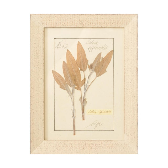 Paper Set of Pressed Herb Frames For Sale - Image 7 of 12