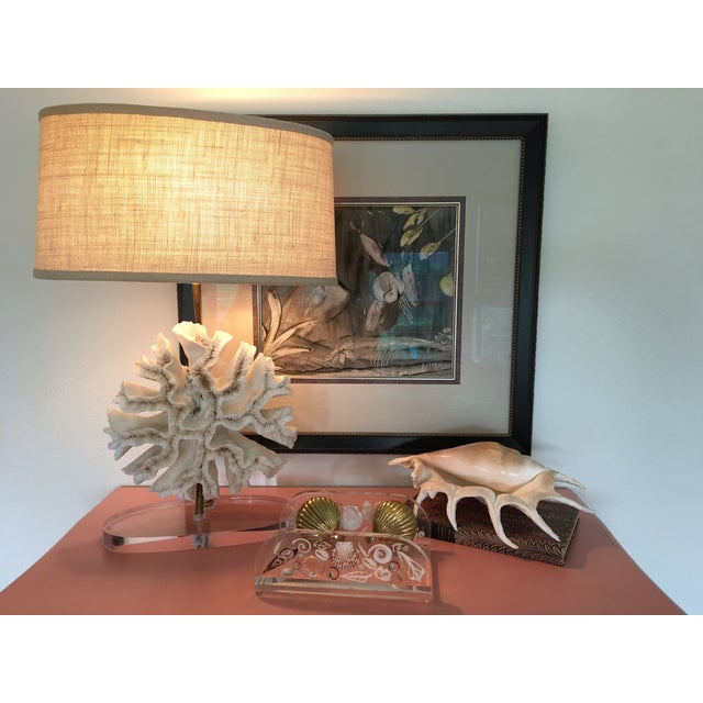 Natural Coral Lamps - Pair For Sale In Austin - Image 6 of 9