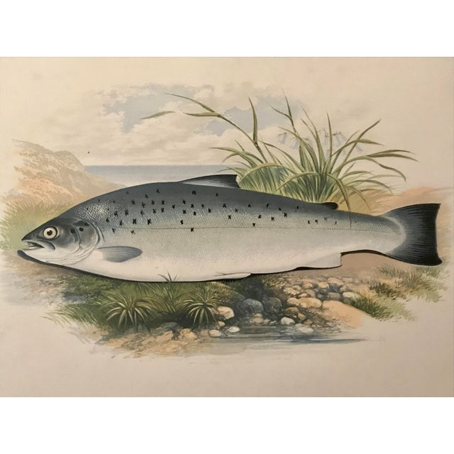 Late 19th Century Antique Color Woodblock Print Salmon Trout Fish William Houghton C.1879 For Sale - Image 5 of 6
