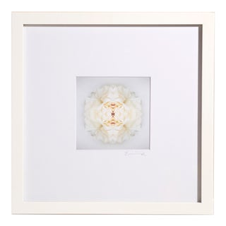 """""""Surface No. 1"""" Contemporary Botanical Print by Erin Derby, Framed For Sale"""