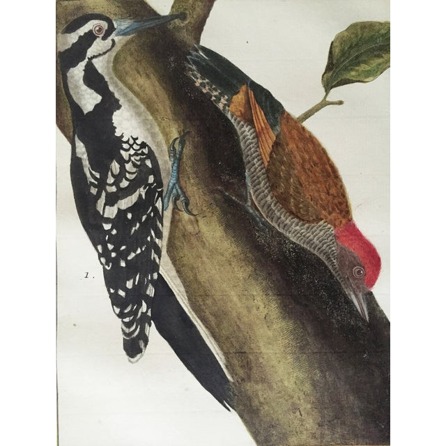Late 18th Century 18th-C. Martinet Ornithological Engraving For Sale - Image 5 of 6