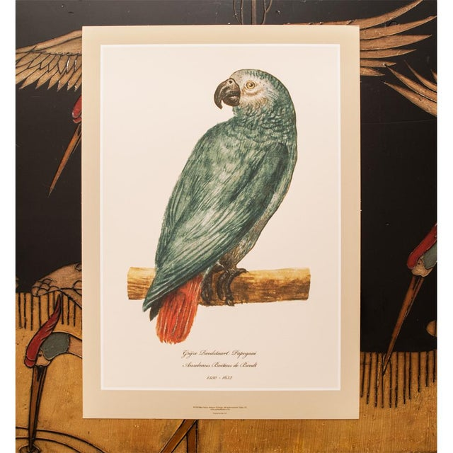 Printmaking Materials XL 1590s Gray Red-Tailed Parrot Print by Anselmus De Boodt For Sale - Image 7 of 8
