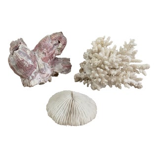 Trio of Coral Barnacle and Shell Specimens For Sale