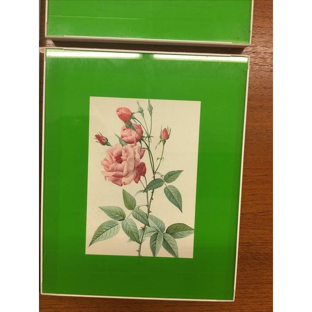 Framed Rose Botanical Prints - Set of 8 - Image 7 of 10
