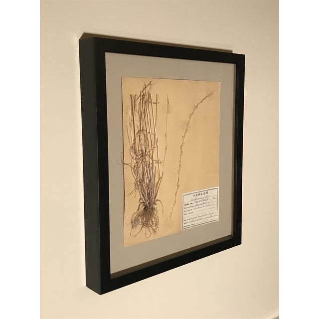 3 Dried, pressed and mounted botanical specimen measuring 8 ½ x 10 inches on heavy paper with handwritten identification...