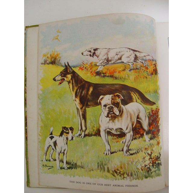 1928 Animal Friends Story Book For Sale - Image 5 of 10