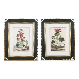 Reproduction 17th Century Botanical Prints - A Pair For Sale