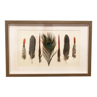 Seven Feathers Framed Under Glass by Kalalou For Sale