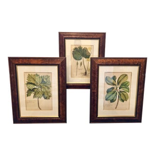 Framed Botanical Prints in Burl Frames - Set of 3 For Sale