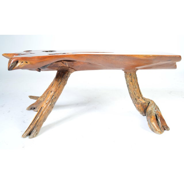 Live edge, free-form sycamore coffee table having sycamore root legs from an estate sale in Princeton, NJ.
