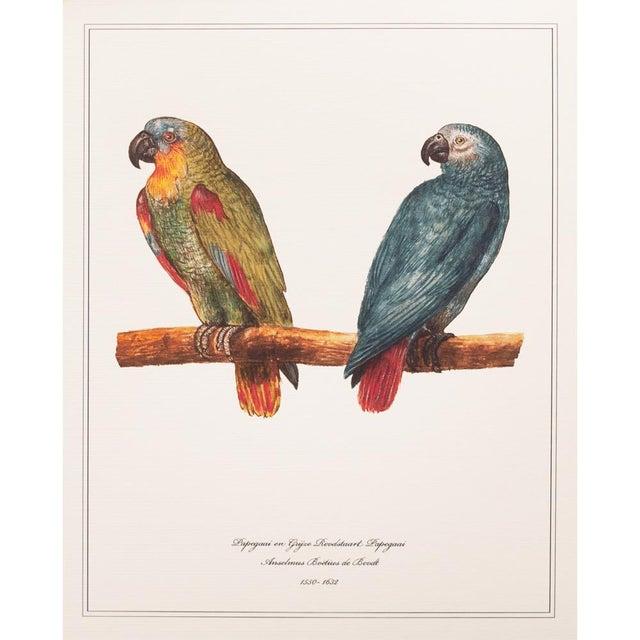 1590s Anselmus Boëtius De Boodt, Parrot Print Set of 9 For Sale In Dallas - Image 6 of 13